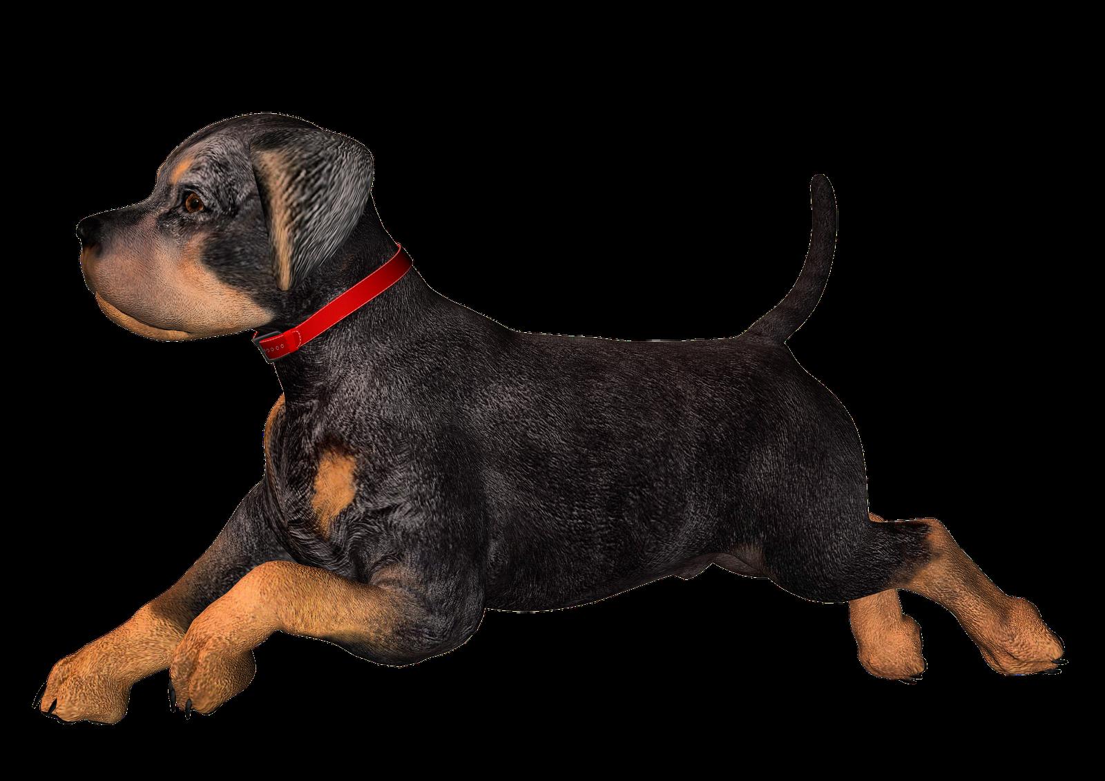 Real rottweiler clip art. Clipart dog football