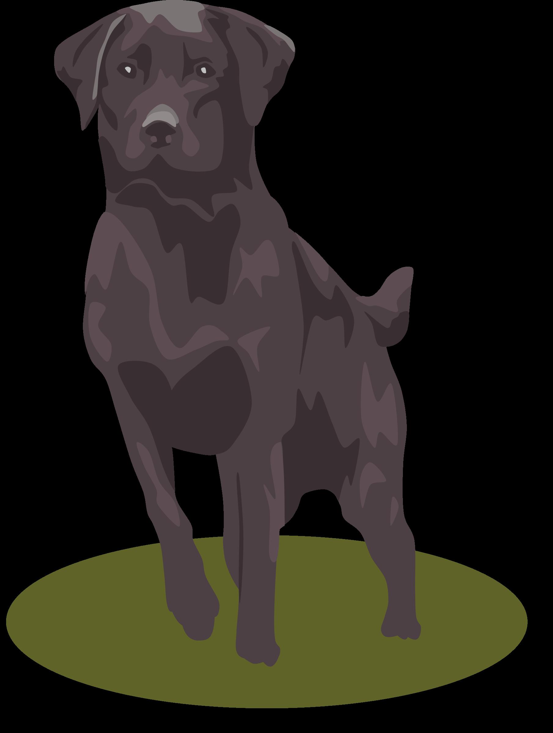 Clipart puppy labrador. Black lab big image