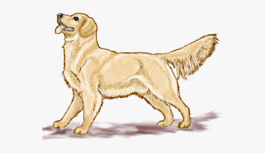 Retriever face clip art. Clipart dogs labrador