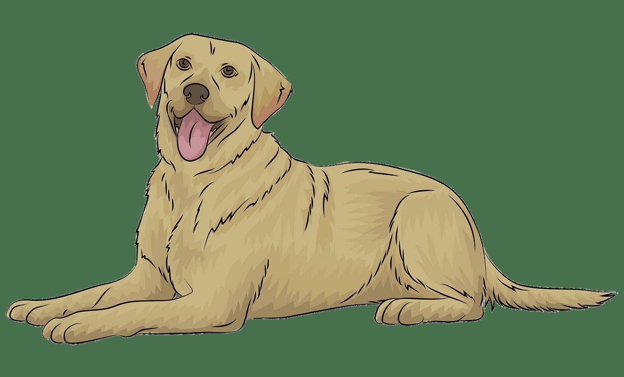 Clipart dogs labrador. Retriever free download creazilla