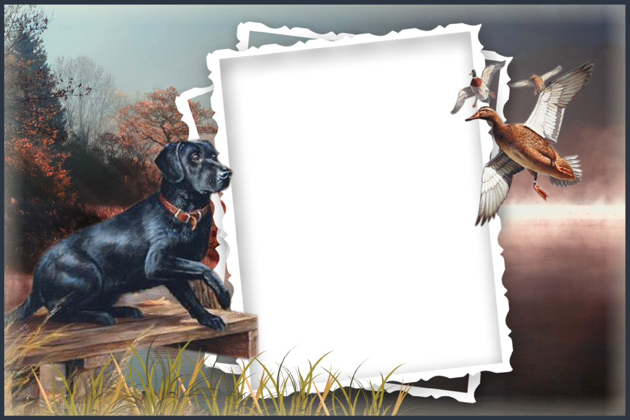 Dog frames target in. Dogs clipart picture frame