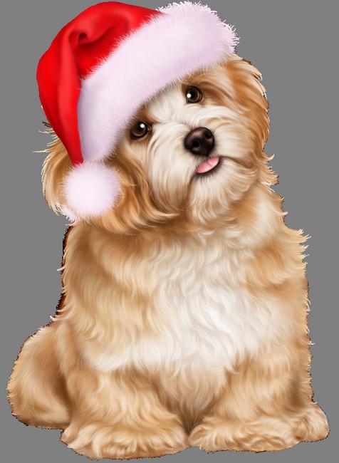 Clipart dog shitzu. Pin by katie m