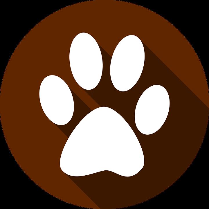Pawprint clipart pug. Shih tzu facts city