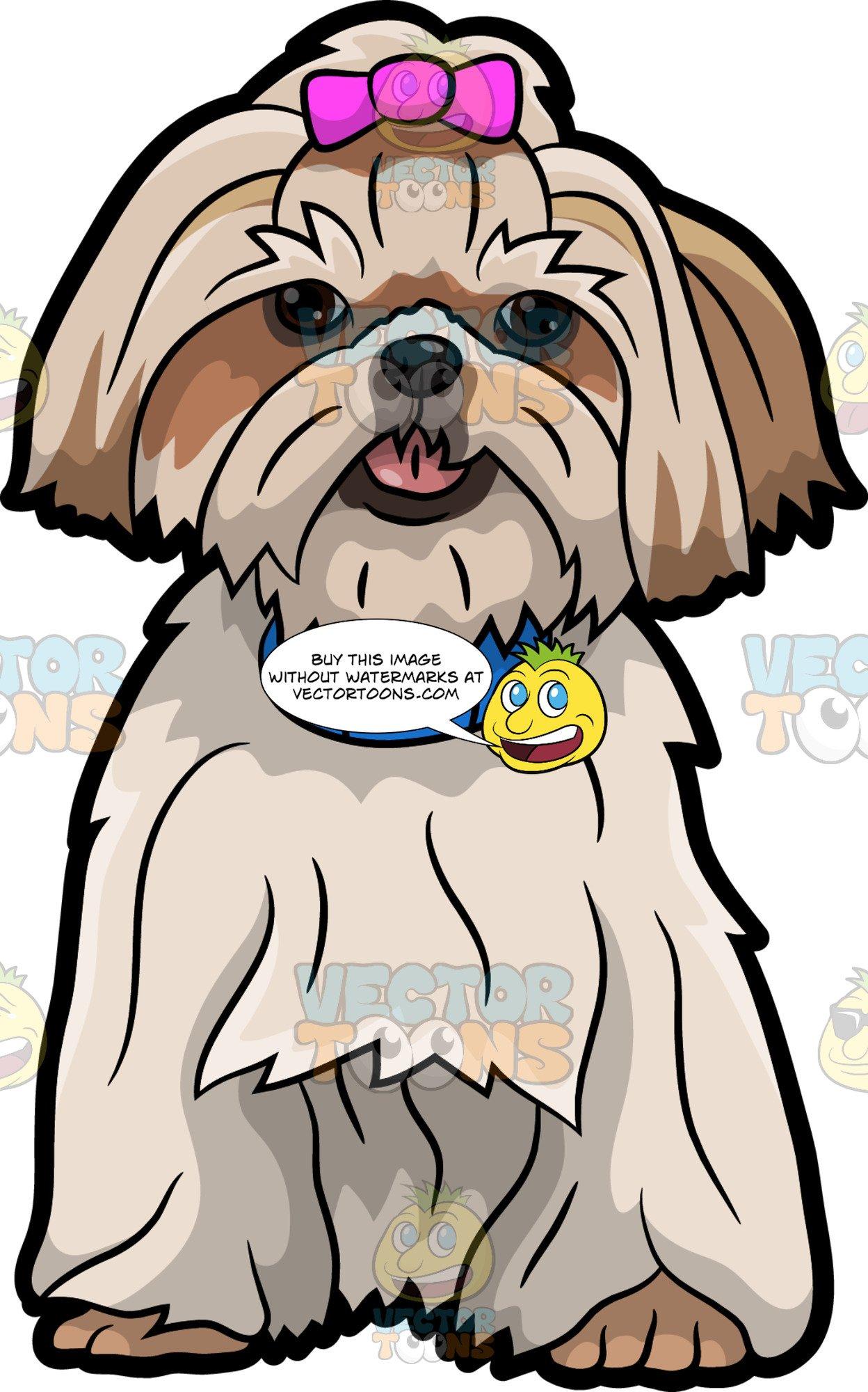 A pretty shih tzu. Dogs clipart shitzu