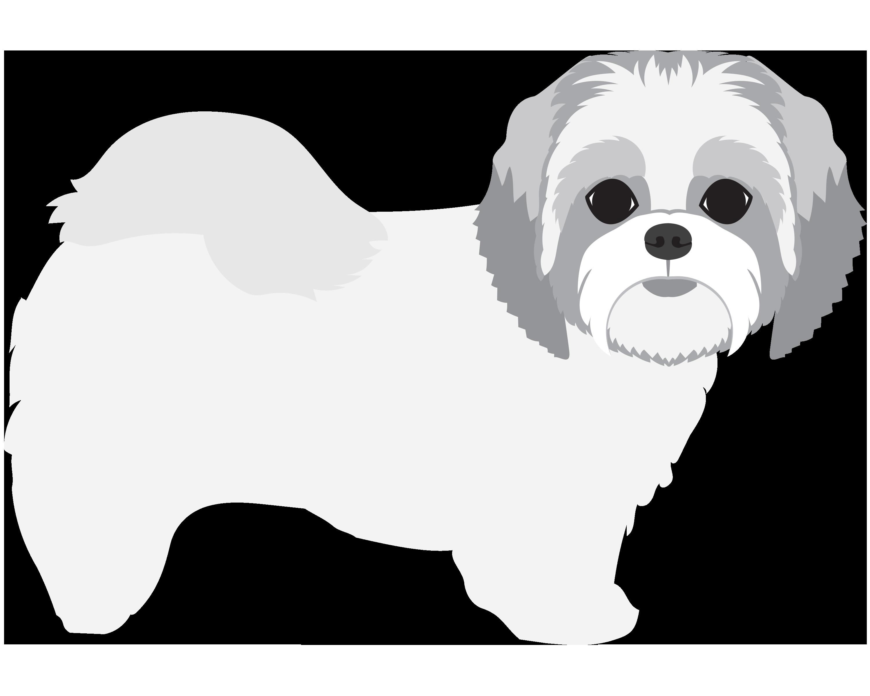 Shihtzu png share this. Clipart dog shitzu
