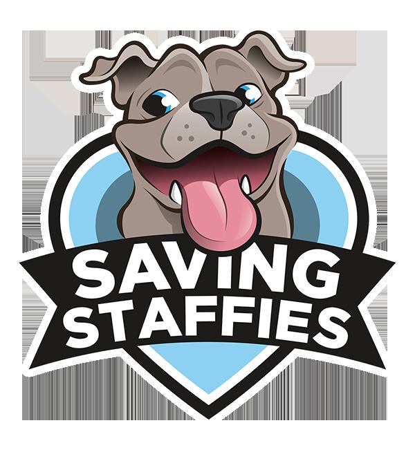 Dog staffy