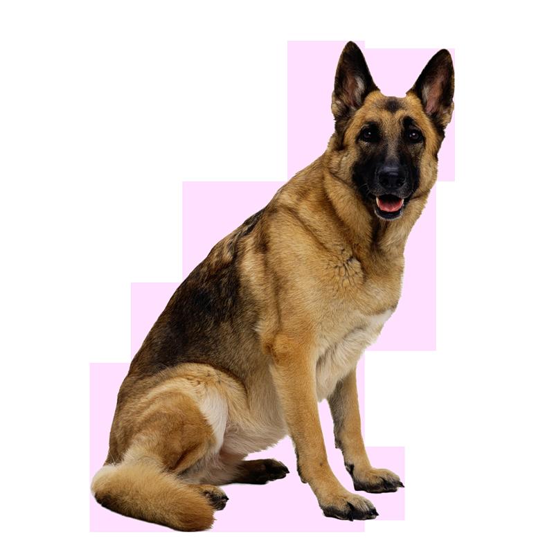 Dog transparent png pictures. Pet clipart 3 animal