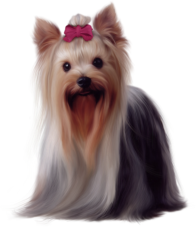 Painted yorkshire terrier png. Dog clipart yorkie
