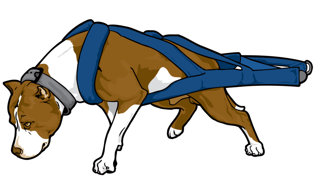 Clipart dogs american bully. Pit bull terrier puppy