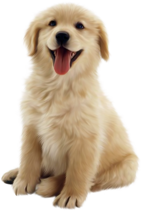 Clipart dogs clear background. Dog transparent png pictures
