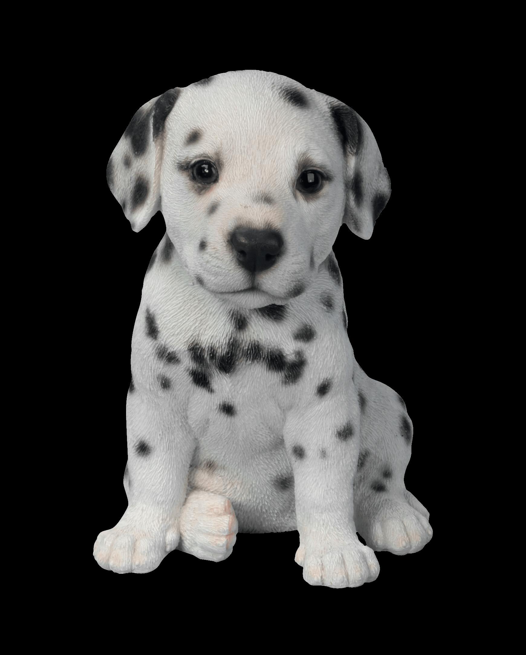 Clipart puppy puppy face. Dalmatian transparent png stickpng