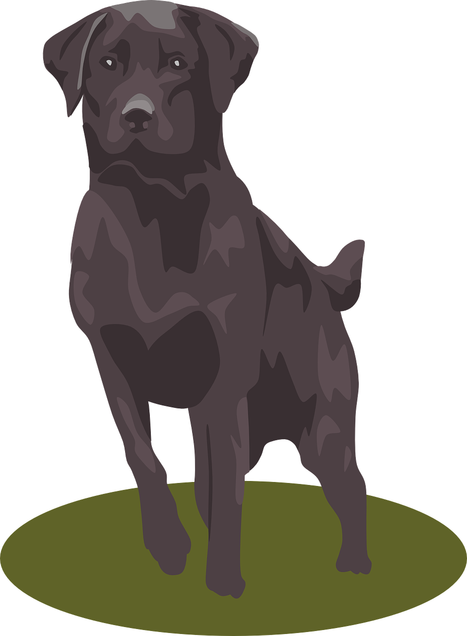 Clipart dogs labrador. Retriever puppy clip art