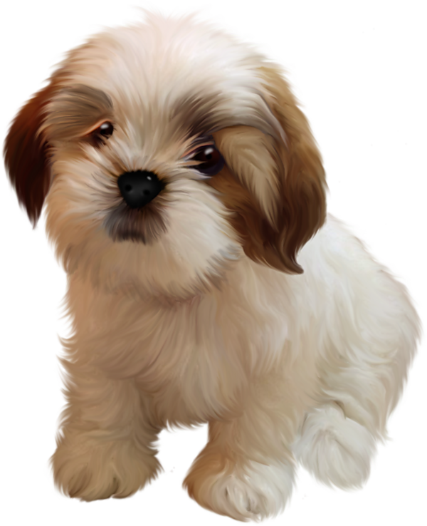 Clipart dogs shitzu. Chiens dog puppies wallpapers