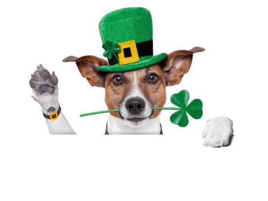 Clipart dogs st patrick day. Great clip art sites