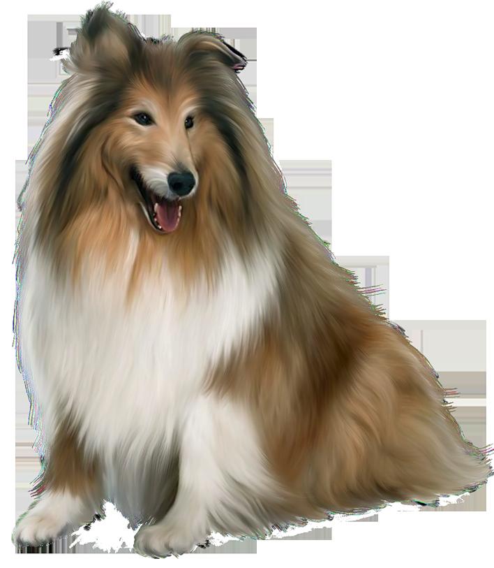 Husky clipart peculiar. Painted scotch collie dog