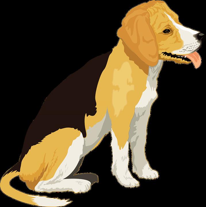 Hunting clipart face. Beagle black dog pencil