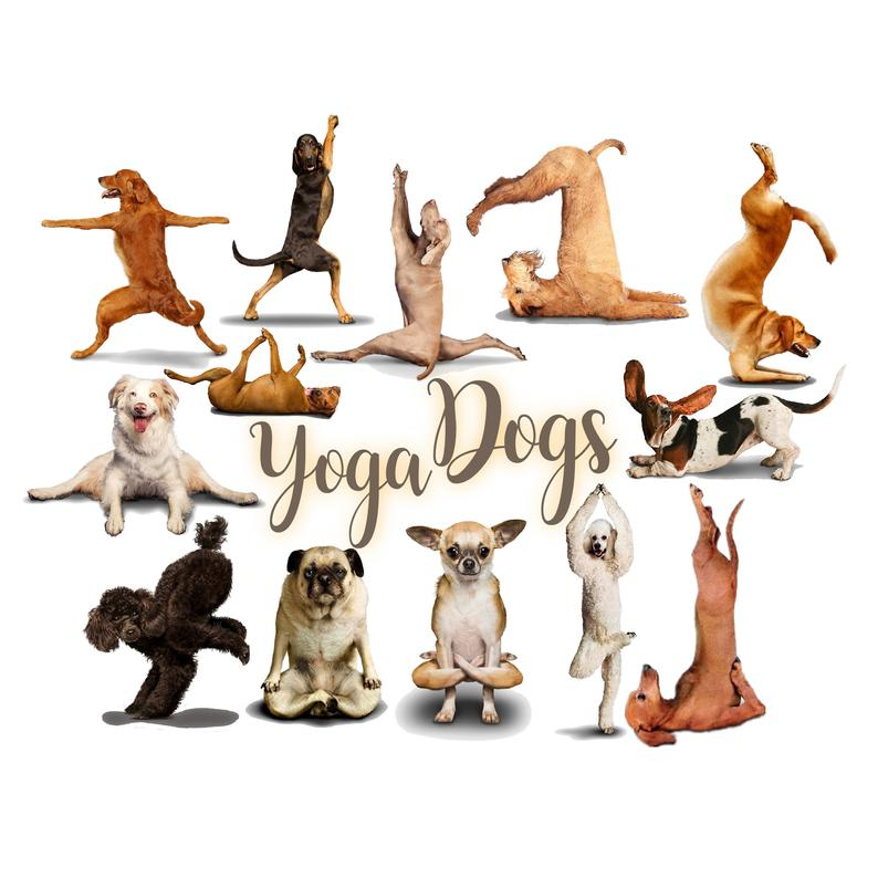 Clip art dog exercise. Dogs clipart yoga