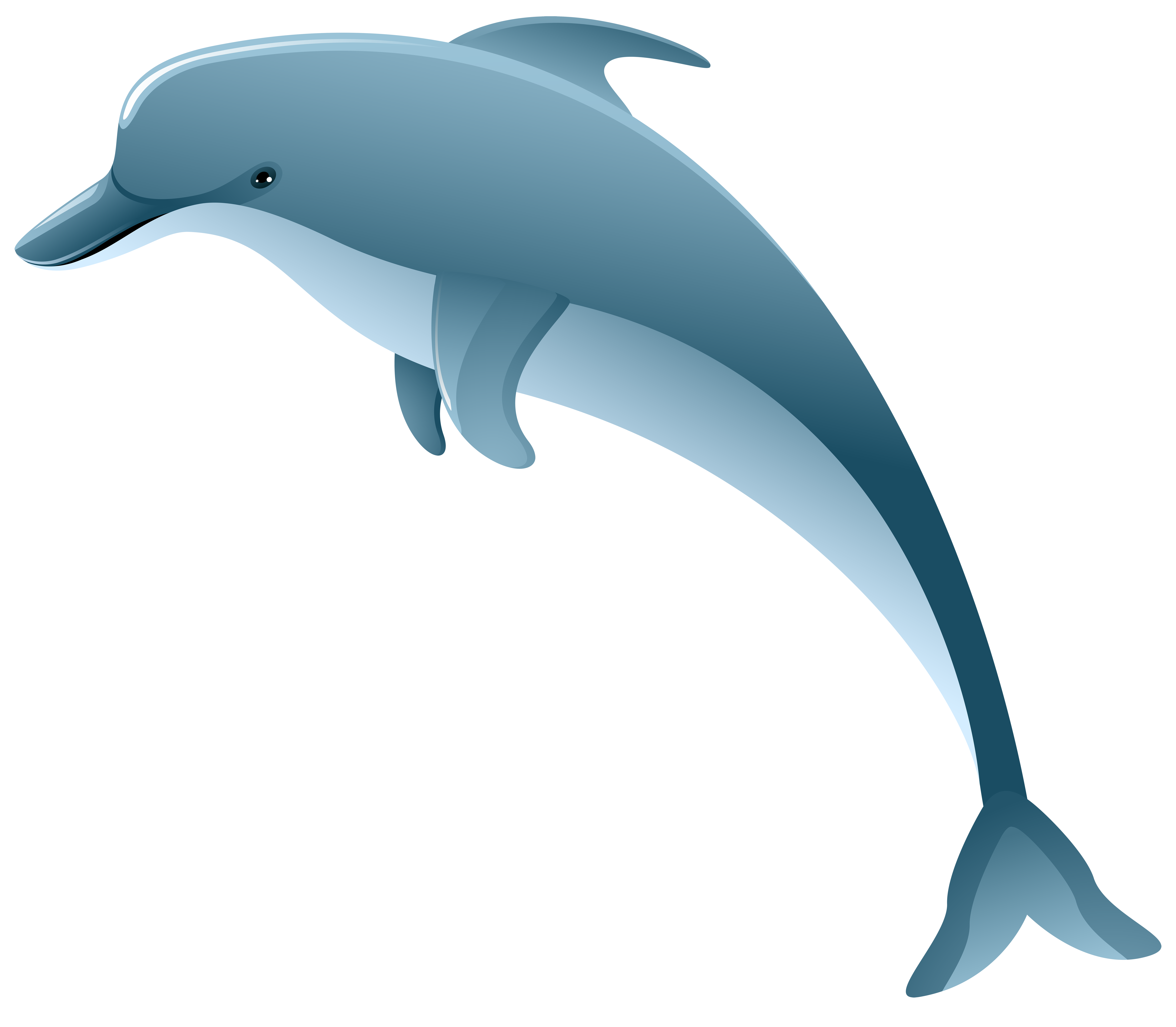 Clipart dolphin. Png clip art image