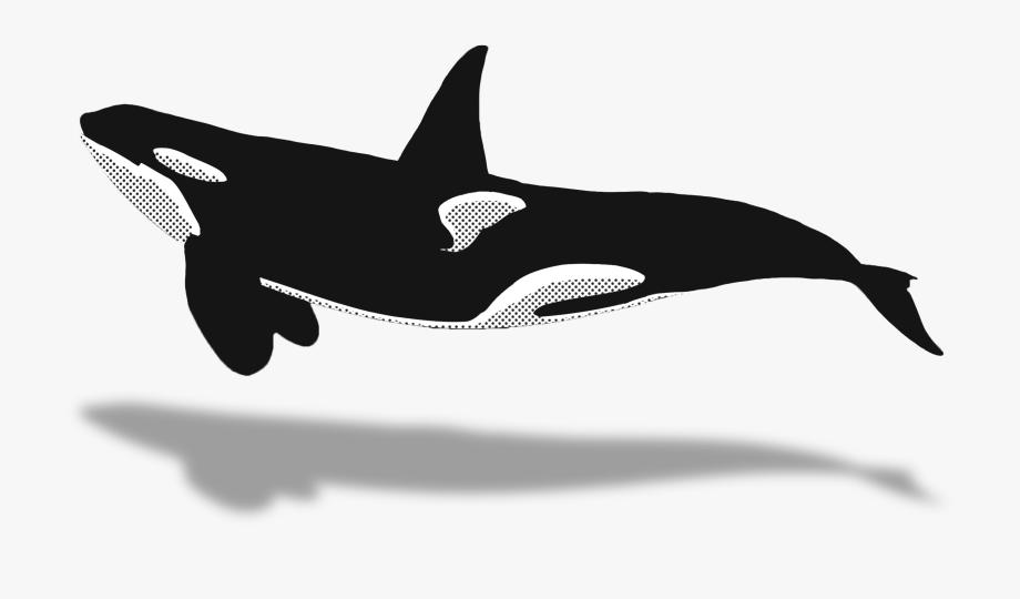 Dolphins killer whale top. Dolphin clipart animal sea nz