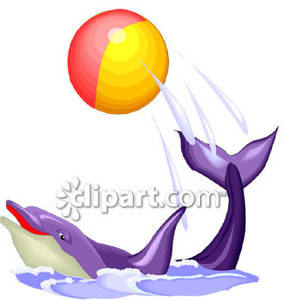 Performing a trick with. Dolphin clipart ball