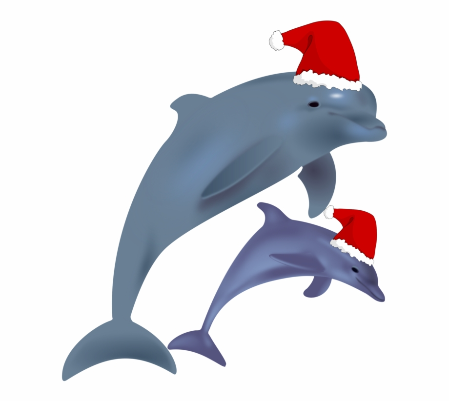Common bottlenose clip with. Dolphin clipart christmas