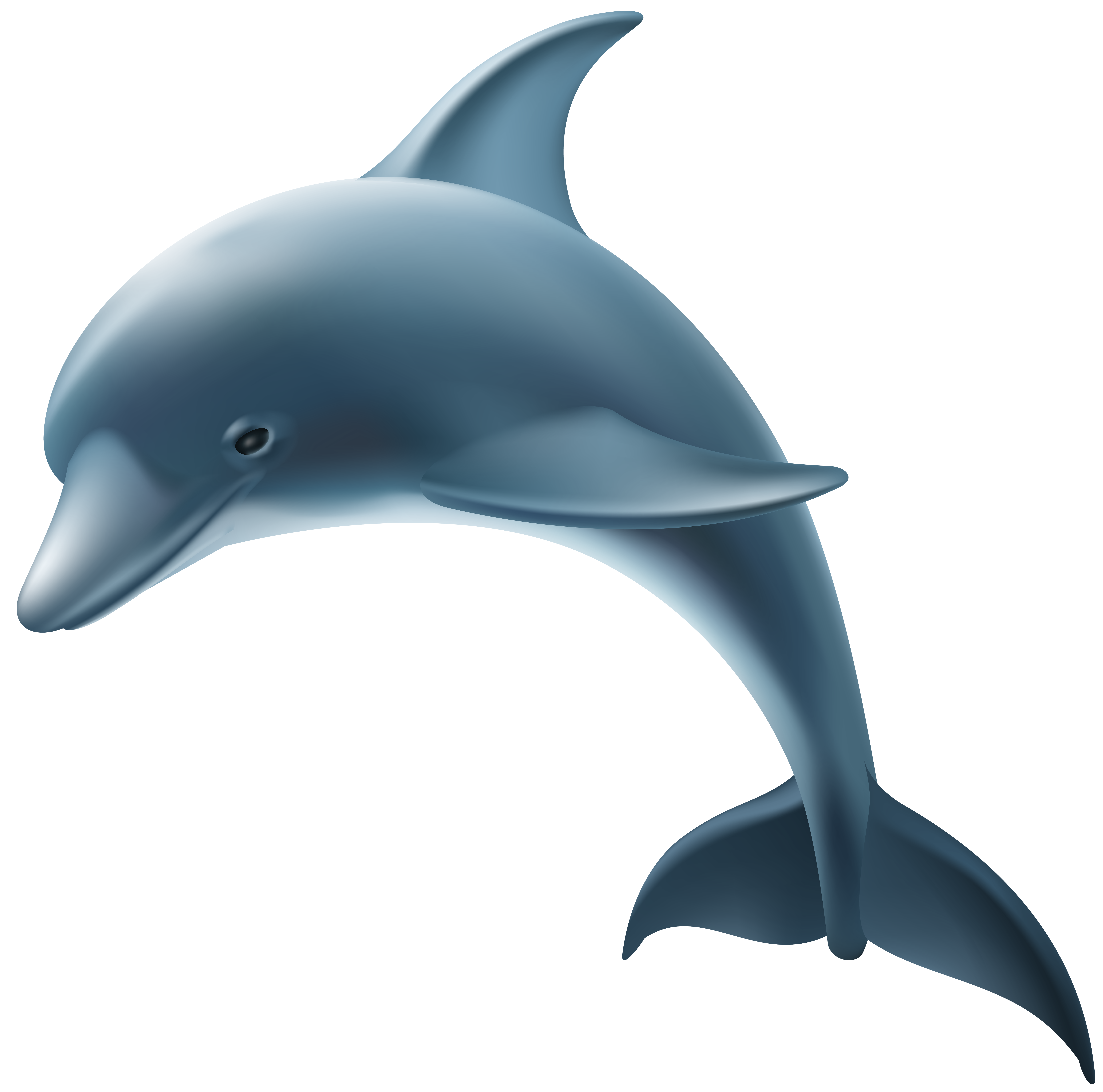 Clipart dolphin clear background. Common bottlenose transparency and