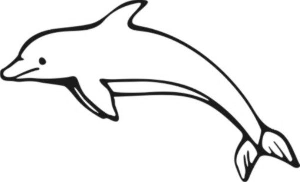 Pictures to color home. Dolphin clipart colorful