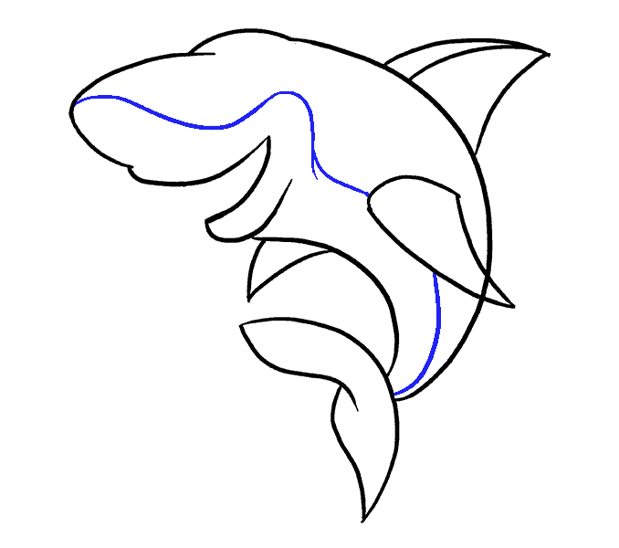 Dolphin clipart colorful. Drawing step by at