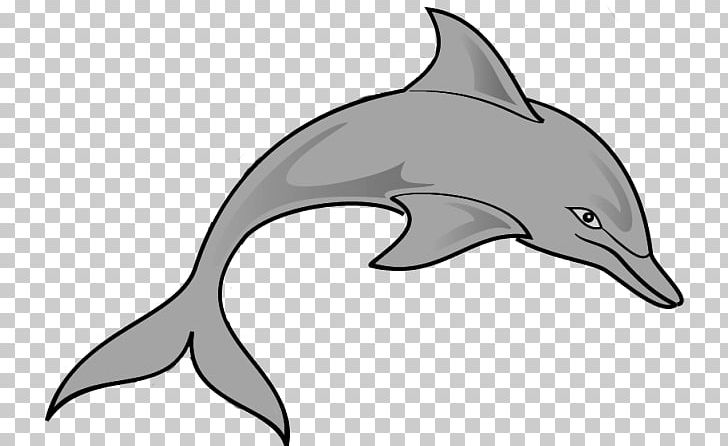 Spinner dolphins all about. Dolphin clipart diving dolphin