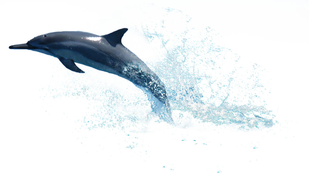 Dolphin png transparent free. Sunset clipart dolphins