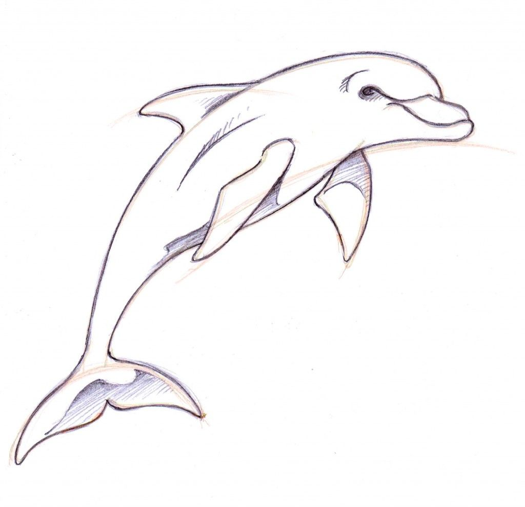 Dolphin clipart pencil. Drawings in how to