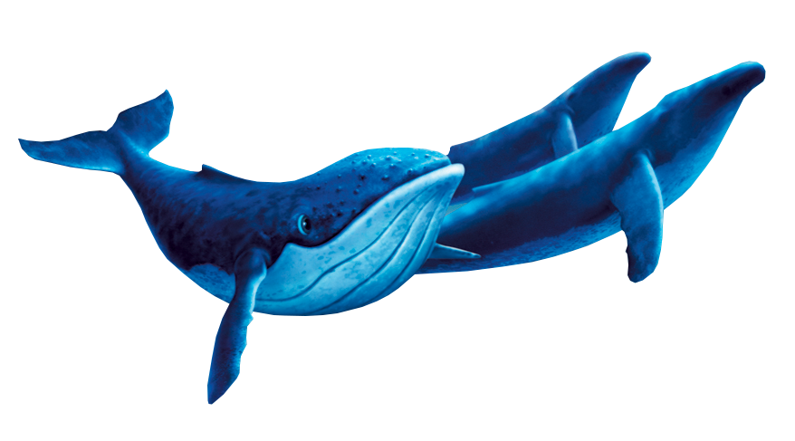 Dolphin clipart animated dancing. Whales fantasia heroes wiki