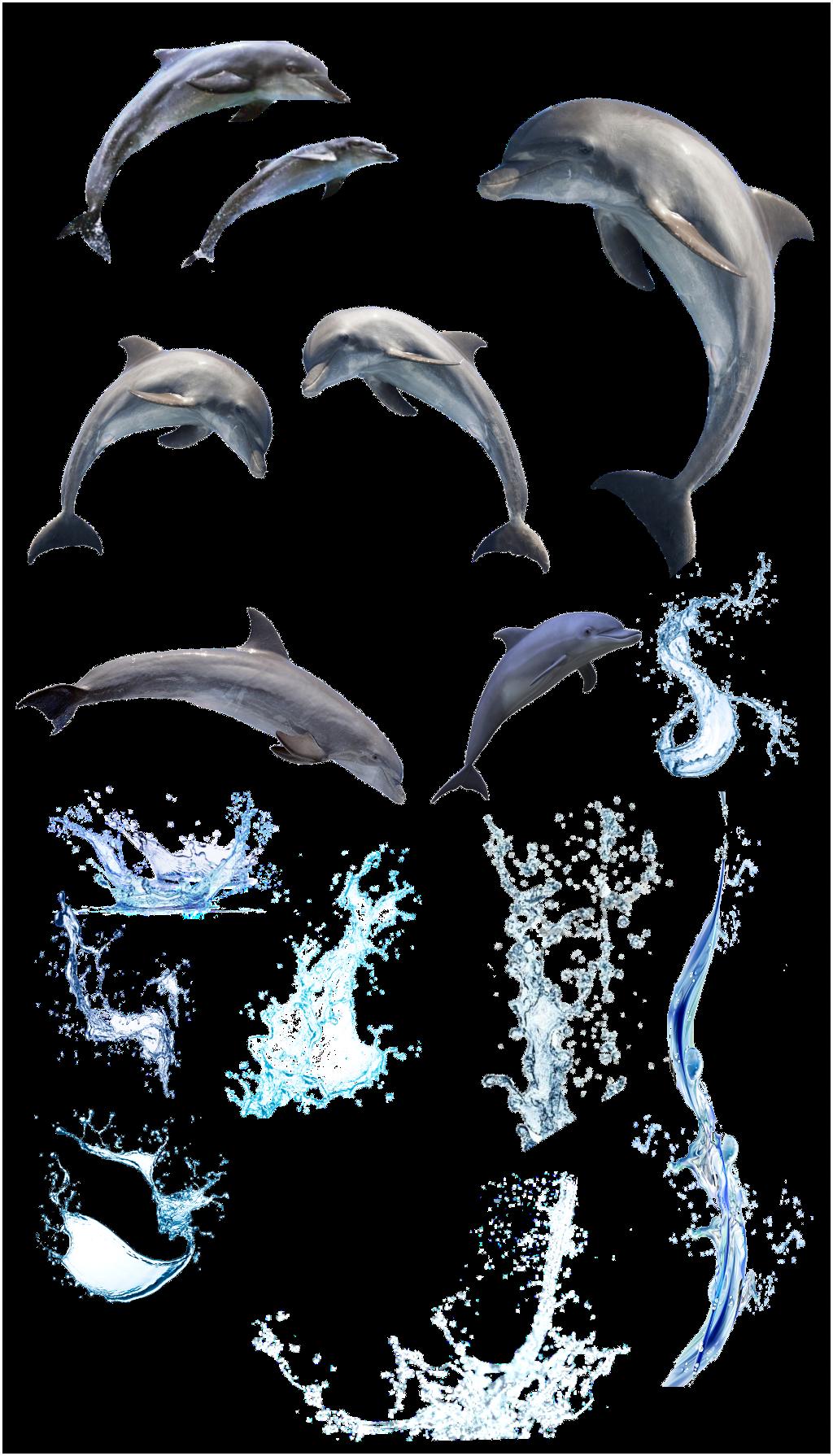 Dolphin clipart dolphin splash. Dolphins water sea sealife