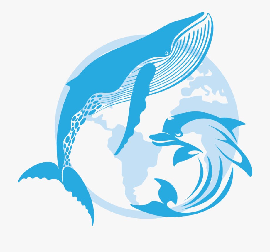 Dolphin clipart dolphin splash. Dolphins illustration
