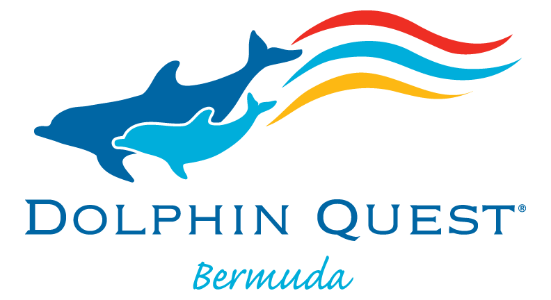 For a day quest. Dolphin clipart dolphin trainer
