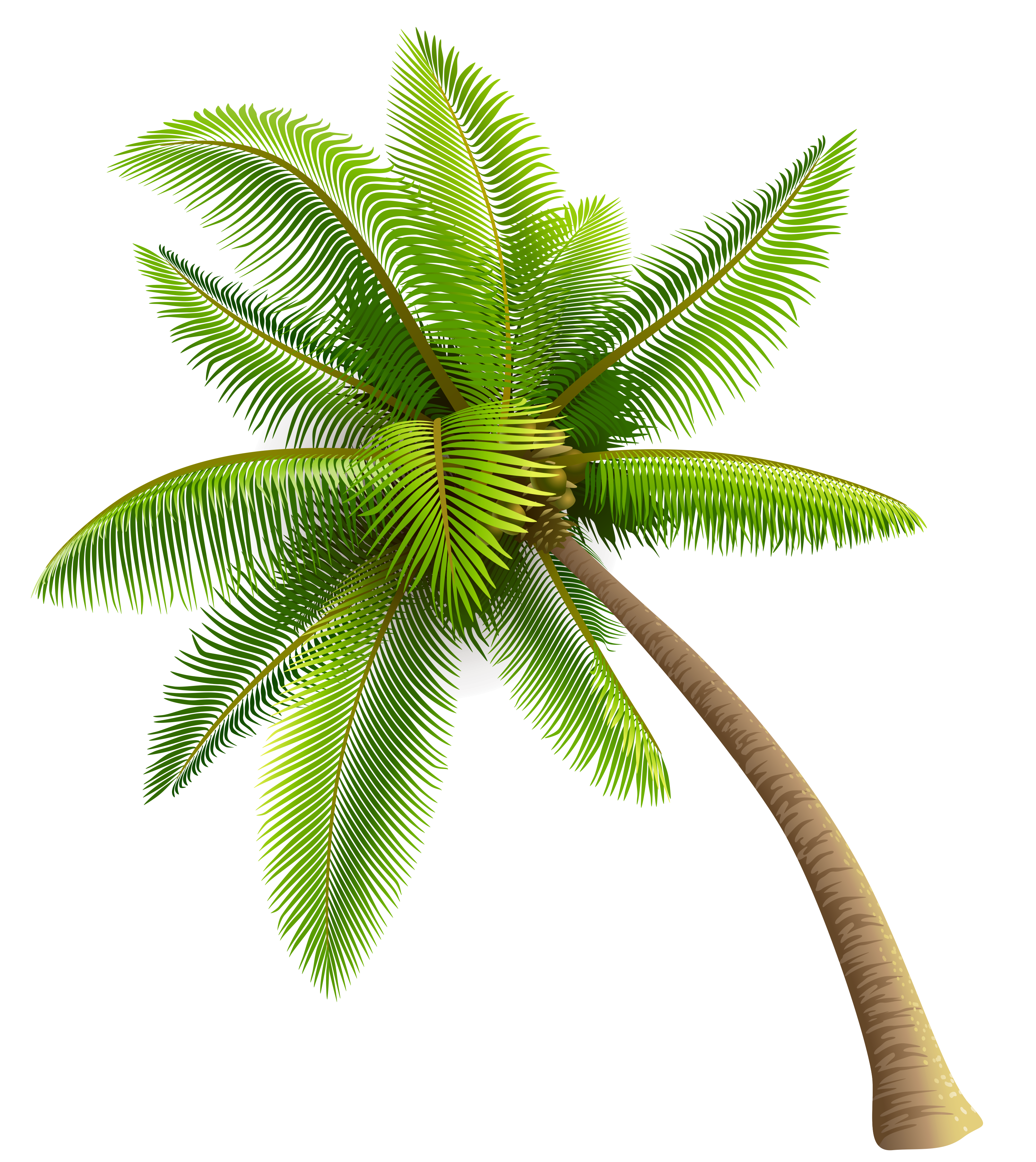 Dolphin clipart drawable. Green palm tree png