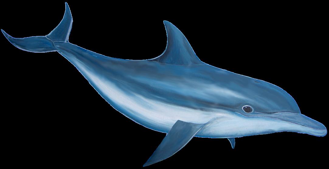 Bottlenose . Dolphin clipart logo