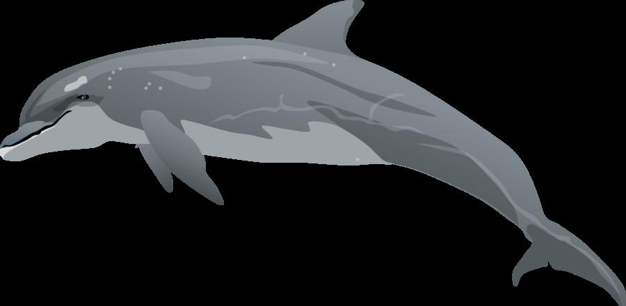 Dolphin clipart logo. Bottlenose
