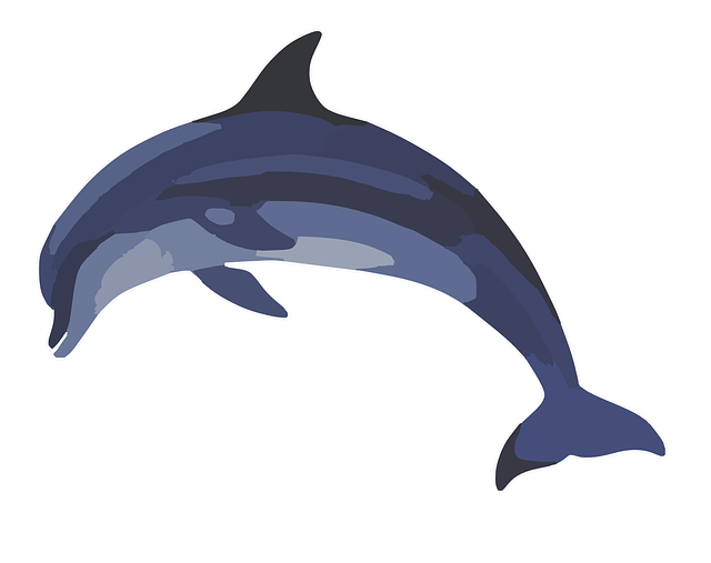 Common bottlenose clip art. Dolphin clipart flipper