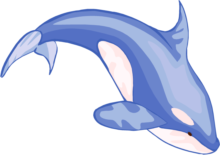 Dolphins spinner dolphin