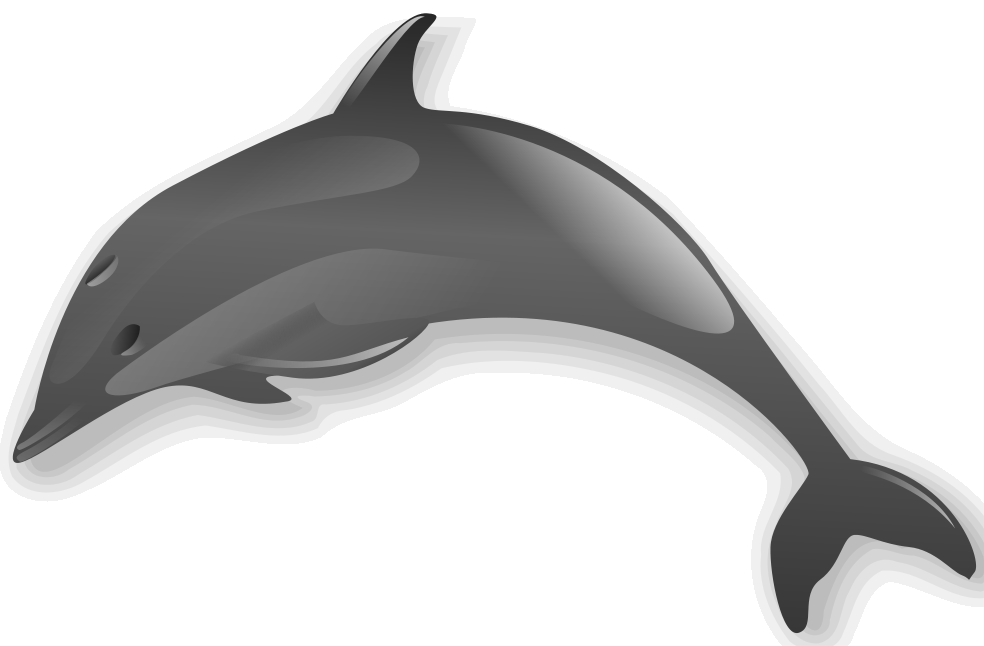 Dolphin clipart flipper. File png wikimedia commons