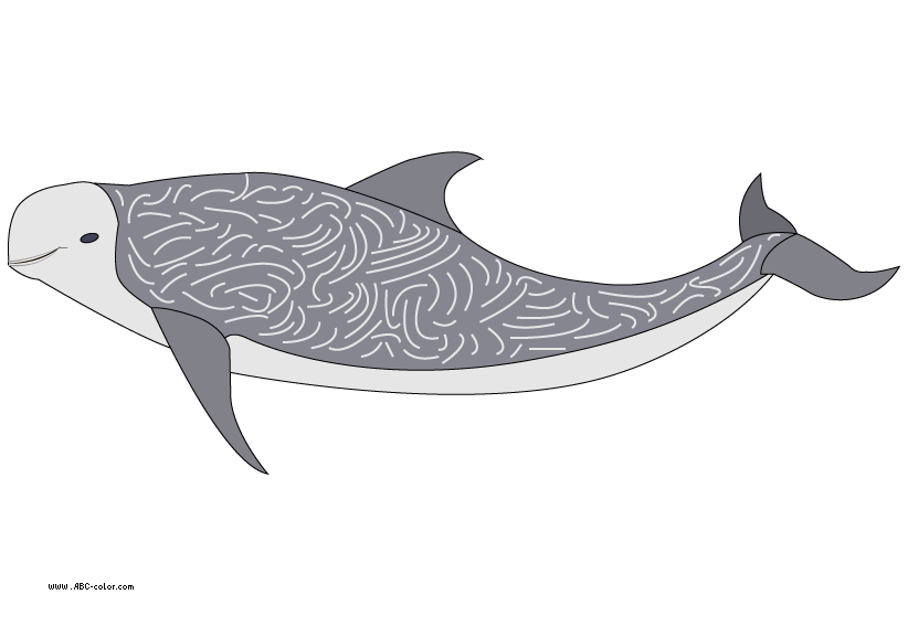 Raster risso s . Clipart dolphin friendly dolphin