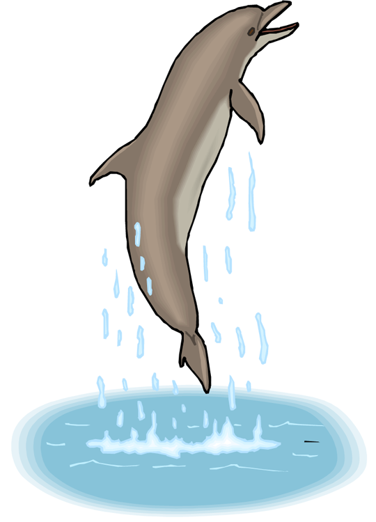 Free dance. Dolphin clipart gray dolphin