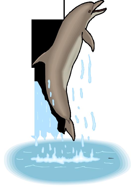 dolphin clipart gray dolphin