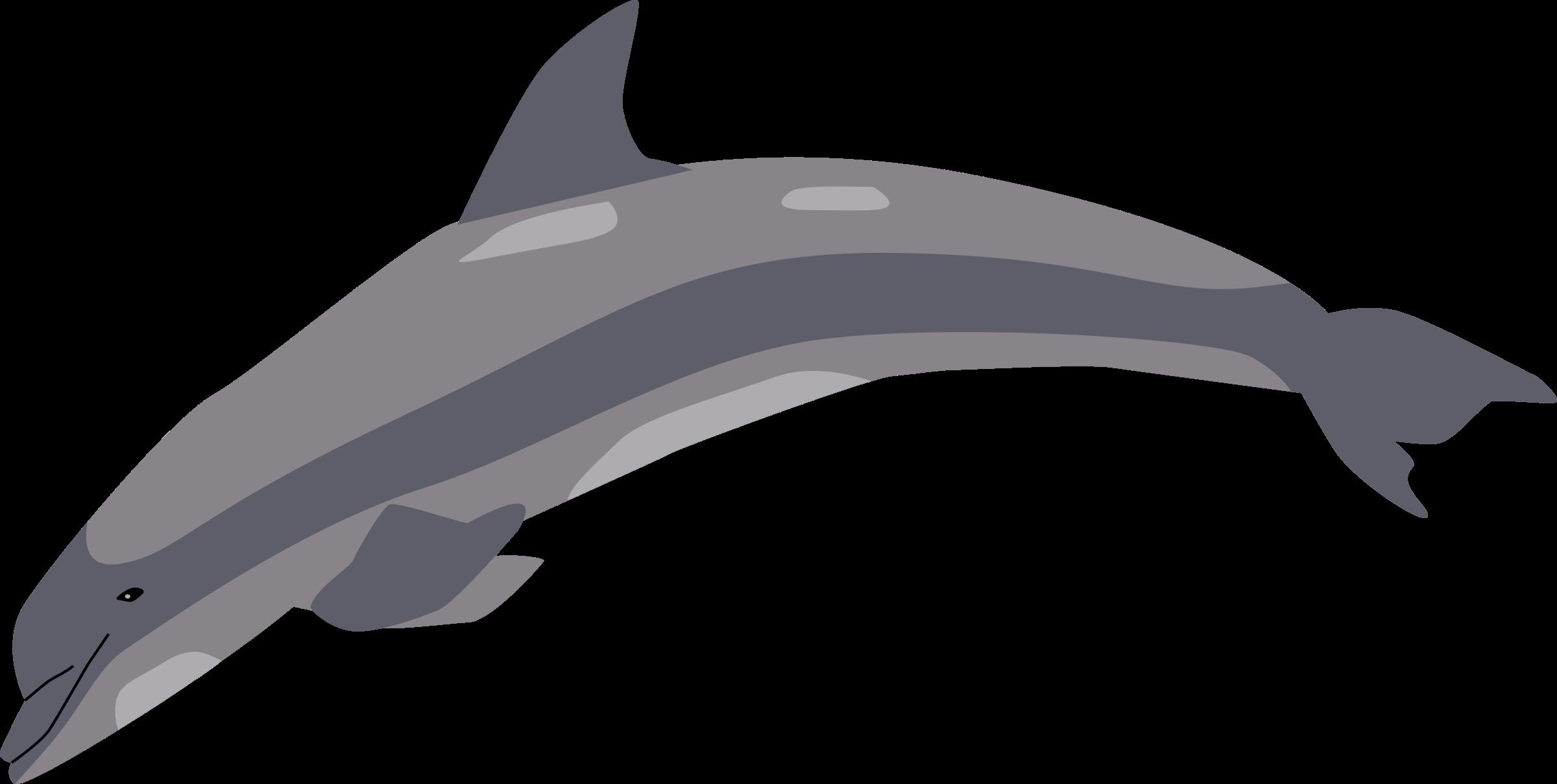 . Dolphin clipart gray dolphin