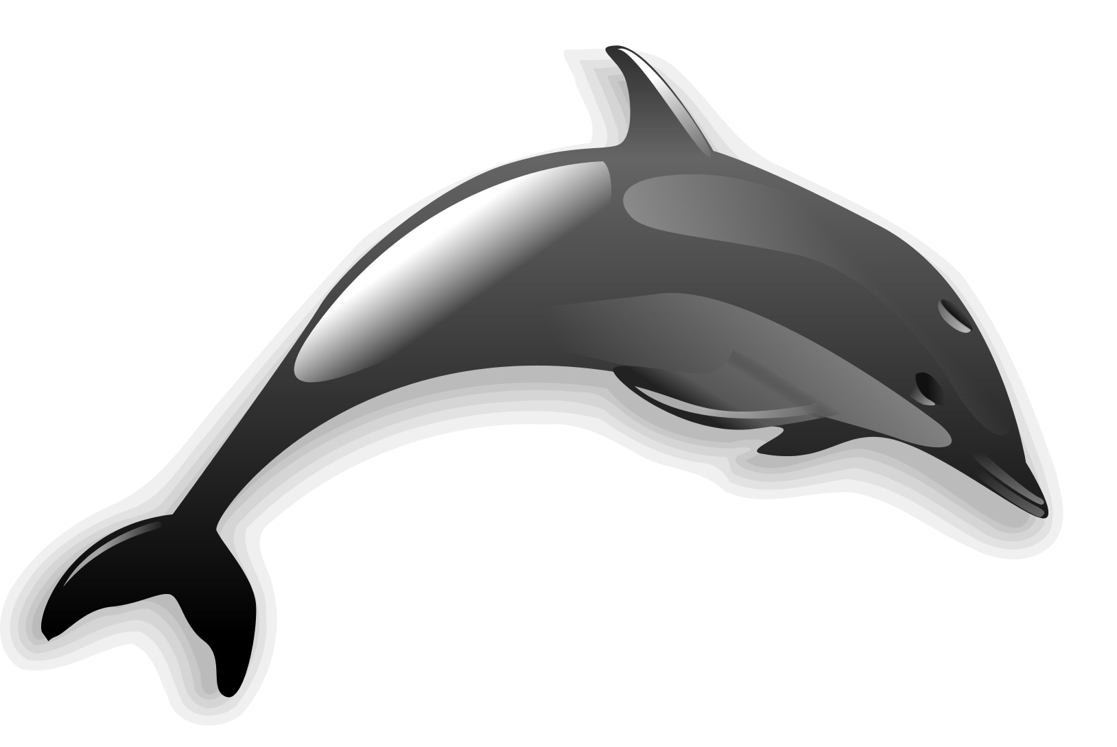Clipart dolphin grey dolphin. The who loved adventures
