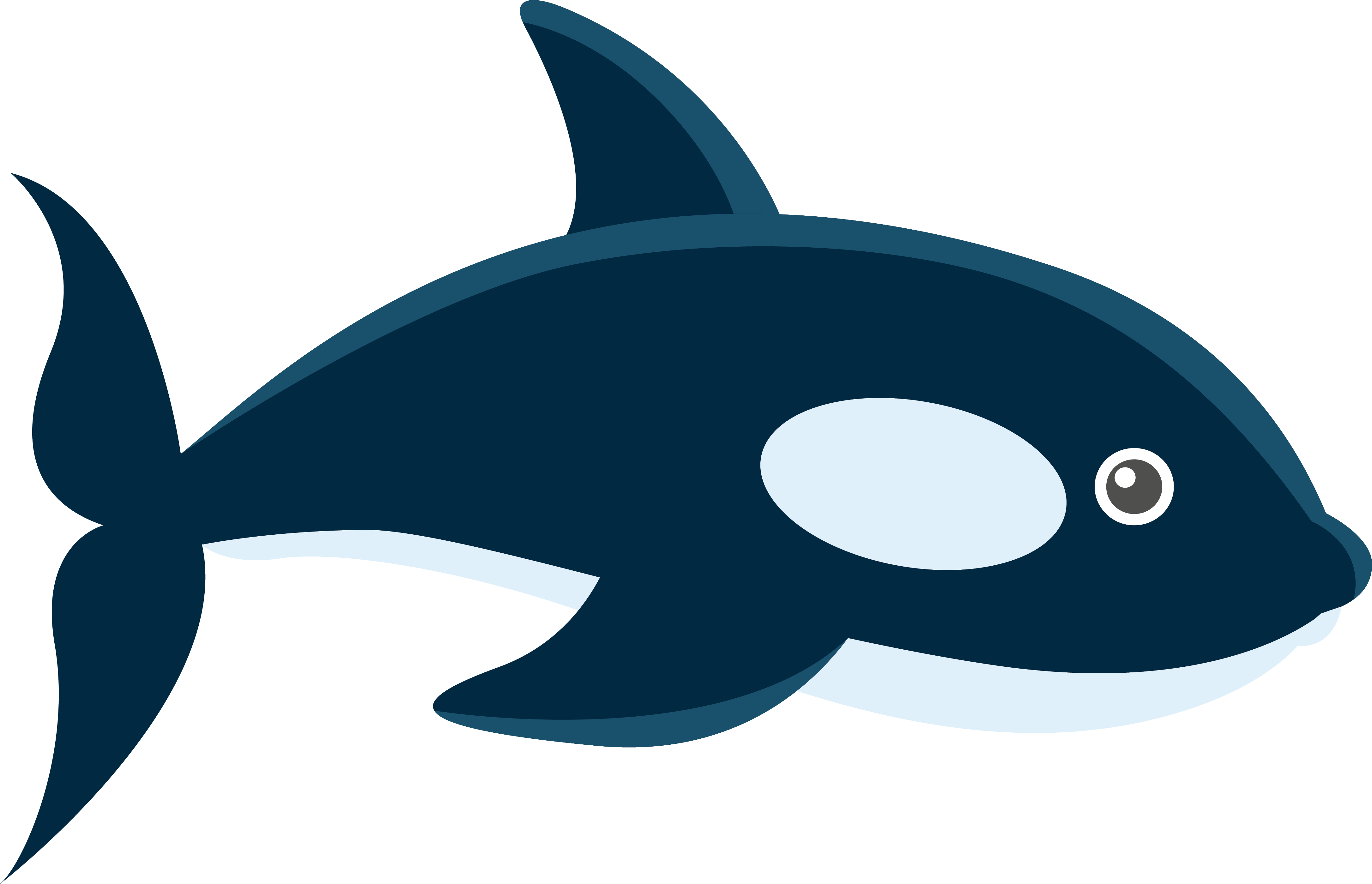 Dolphin clipart illustrator. Whale marine biology adobe