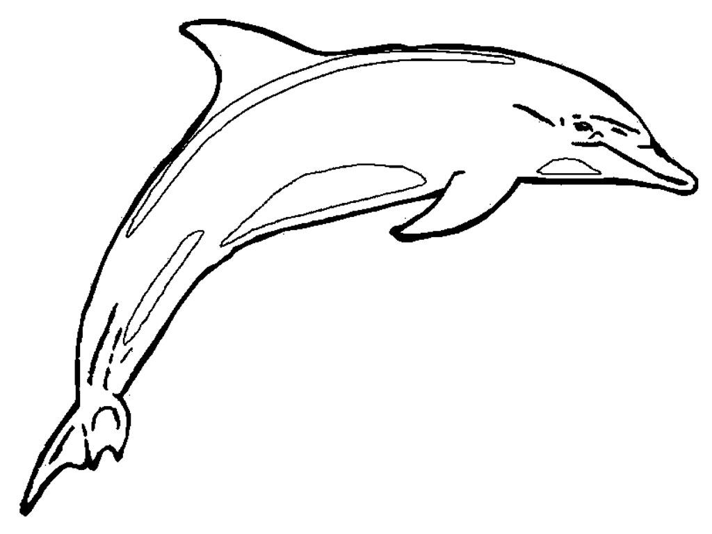 Free line art download. Dolphin clipart drawable