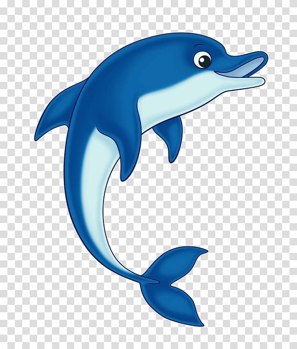 Common bottlenose open cetacea. Dolphin clipart clear background