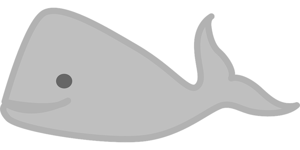 Free image on pixabay. Dolphin clipart marine biome